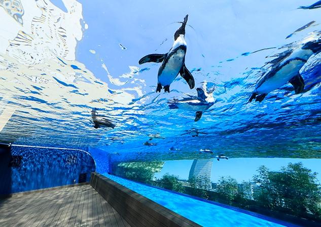サンシャイン水族館_デート_天空のペンギン